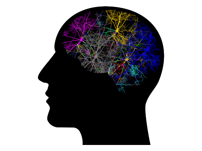 neurofeedback cranium outline with colored areas of brain